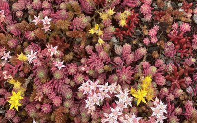 Eco Friendly Sedum Roof